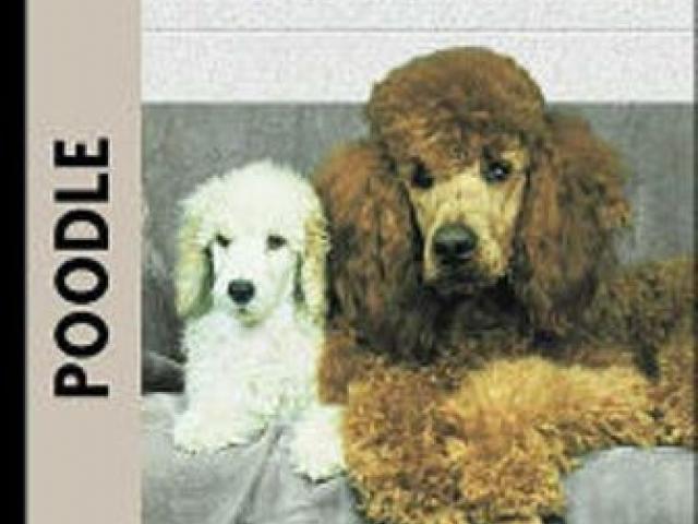 Poodle Book
